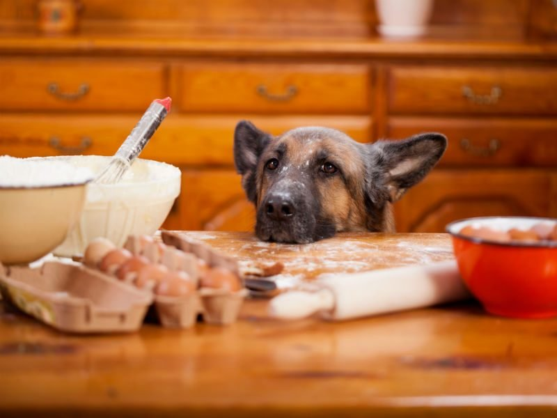 Homemade Dog Food Recipes That Are Vet Approved